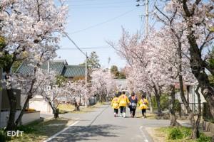 知多半島の各地で 春まつりと桜がセットで楽しめます
