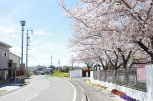 入口の桜が出迎えてくれる