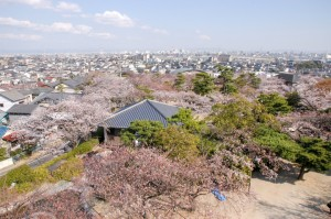 展望台からみた桜の景色